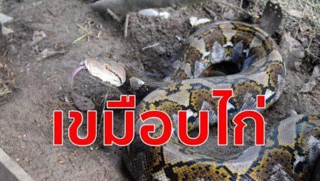 งูเหลือมจอมเขมือบ, จิตอาสา,จับงูมือเปล่า,สามัคคีรวมใจ,อาสาพาบุญ,งูกินไก่,