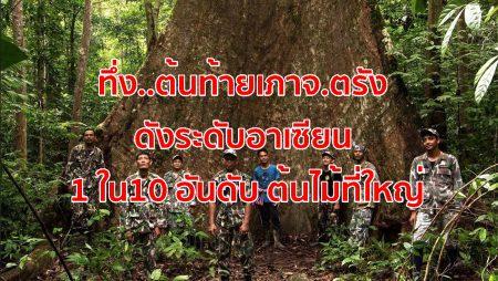 ต้นท้ายเภา จ.ตรัง,10 อันดับต้นไม้ที่ใหญ่,สุดยอดต้นไม้ใหญ่,กลุ่มอนุรักษ์,ต้นไม้ยักษ์,เทือกเขาบรรทัด,ต้นไม้ใหญ่ตรัง,ต้นท้ายเภา ตรัง, ต้นท้ายเภายักษ์.ต้นท้ายเภายักษ์ จ.ตรัง,