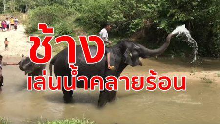 กลุ่มคนเลี้ยงช้าง,ช้างจังหวัดตรัง,ช้างเล่นน้ำ,ขี่ช้าง,